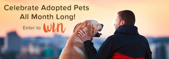 Pet360 Sweepstakes