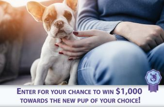 MyLittlePuppy Sweepstakes