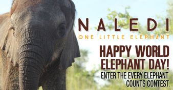 Every Elephant Counts Contest Sweepstakes